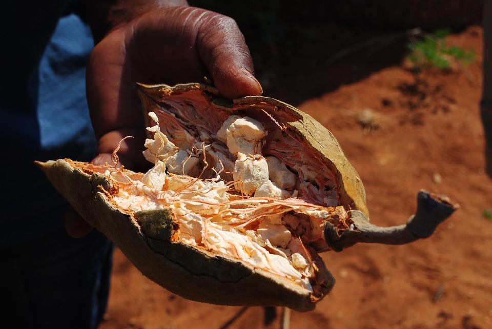 Fruit Africa Baobab Fruit Eat Baobab